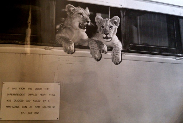 Lion-cubs-at-Kima-Station